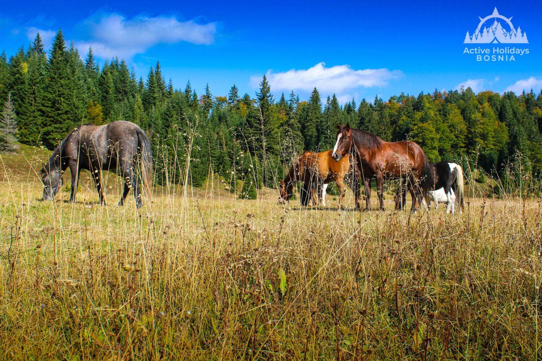 Horses Zelengora Vrbnica