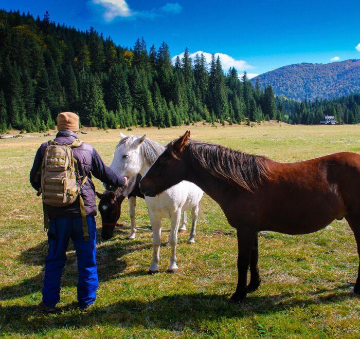 Zelengora Pasina poljana horses