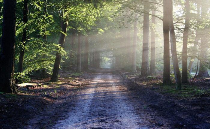 sun lights through the forest